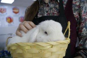 День мастер-классов. Пасхальный кролик